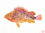 Fish Print/ Gyotaku